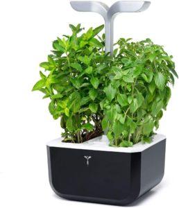 auto growing plant pot